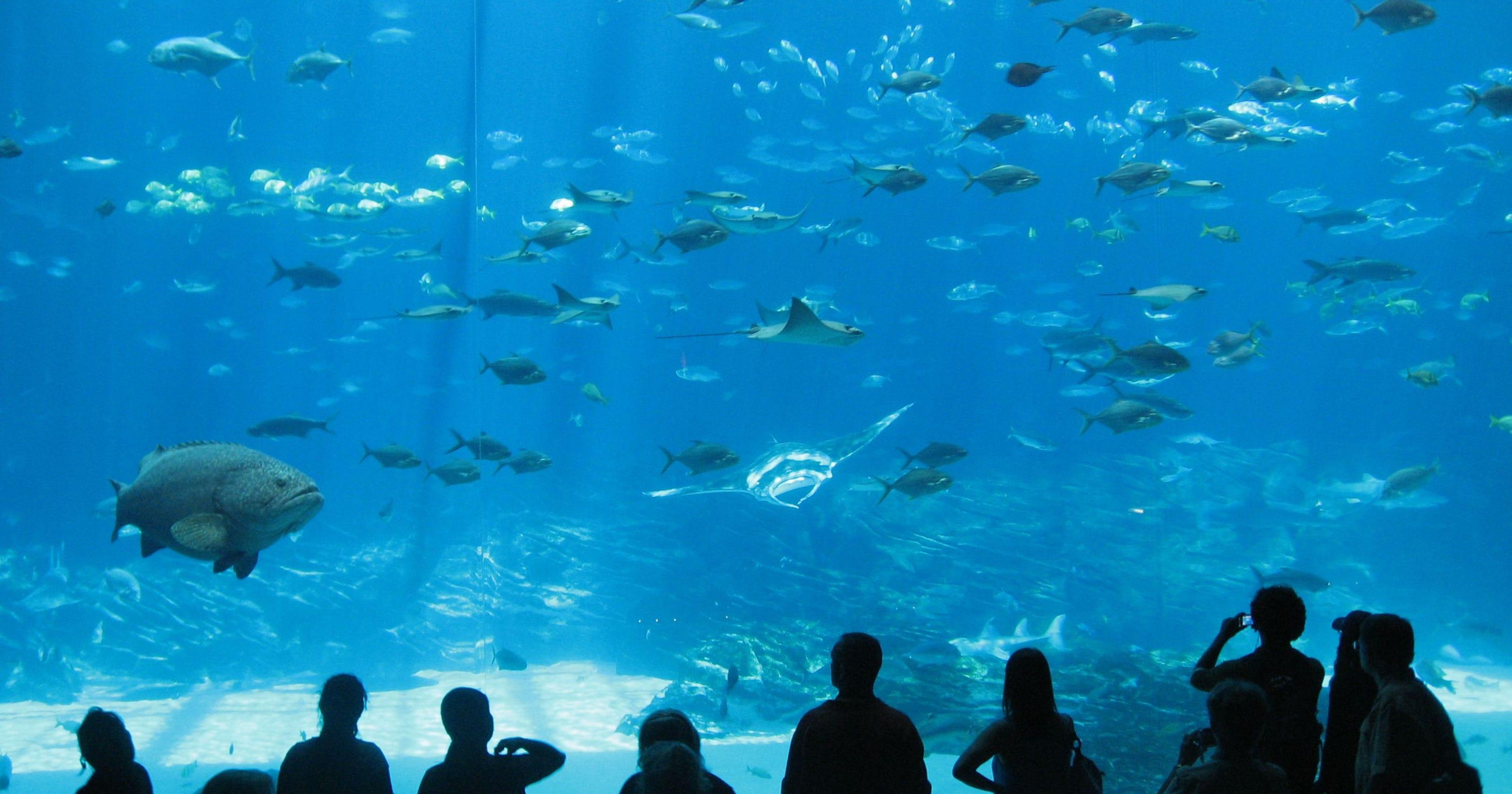 Georgia Aquarium Thanksgiving  TripAdvisor names the world s top aquariums