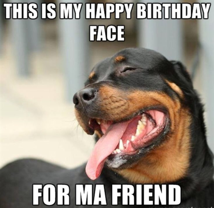 Happy Birthday Friend Funny  20 Funny Happy Birthday Memes