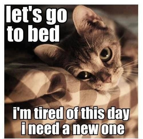 Pictures With Funny Quotes  Funny Lazy Cat