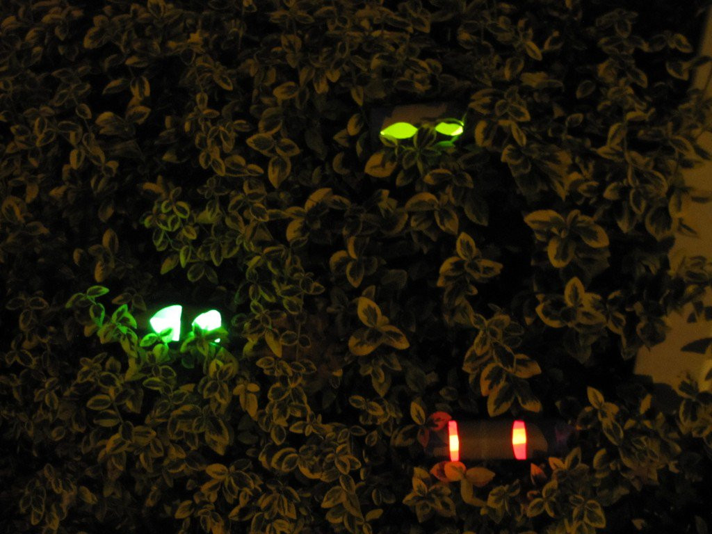 Toilet Paper Roll Halloween Eyes  DIY Halloween Decorations Daily Dead