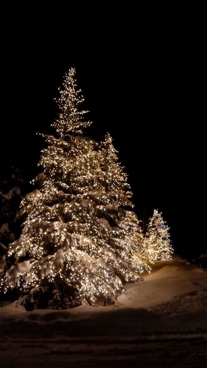 White Outdoor Christmas Tree  The magic of outdoor Christmas lights in the snow Love