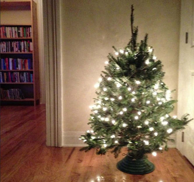 Apartment Sized Christmas Tree  Christmas Tree Maintenance for Your NYC Apartment