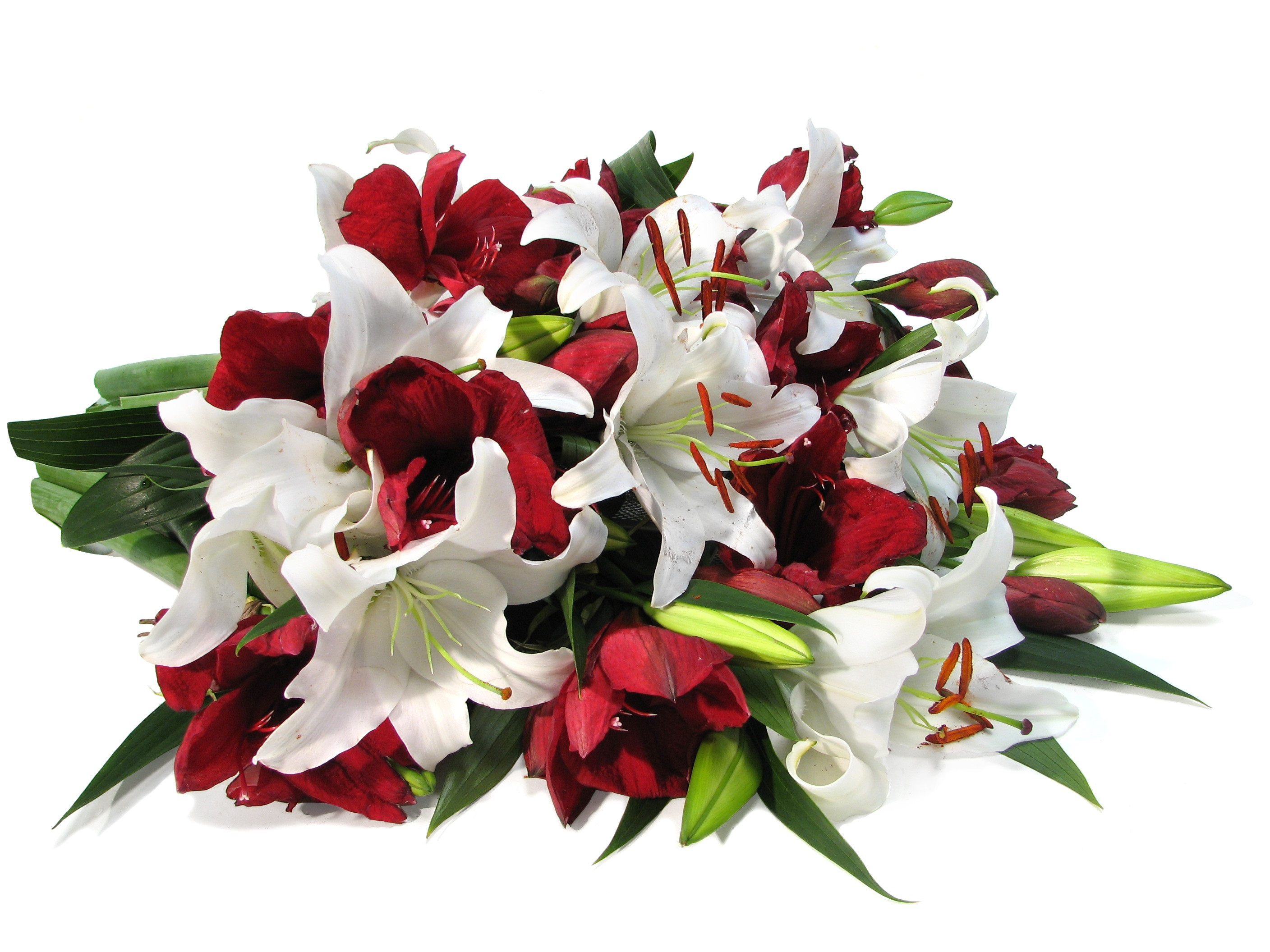 Christmas Flower Delivery Usa  Christmas Flowers