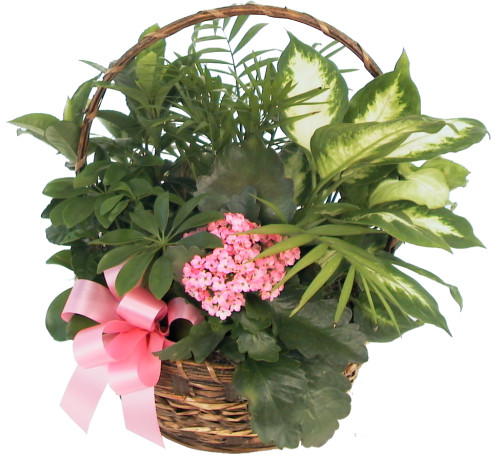 Christmas Flower Delivery Usa  USA Flower Delivery · Fruit Baskets & Plants · Gift of