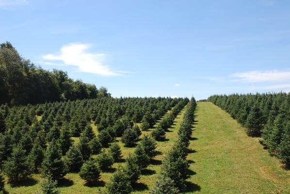 Flower Mound Christmas Tree Farm  l