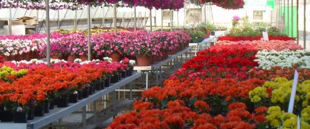 Flower Mound Christmas Tree Farm  Flower Farm Otten Brothers Garden Center Long Lake MN