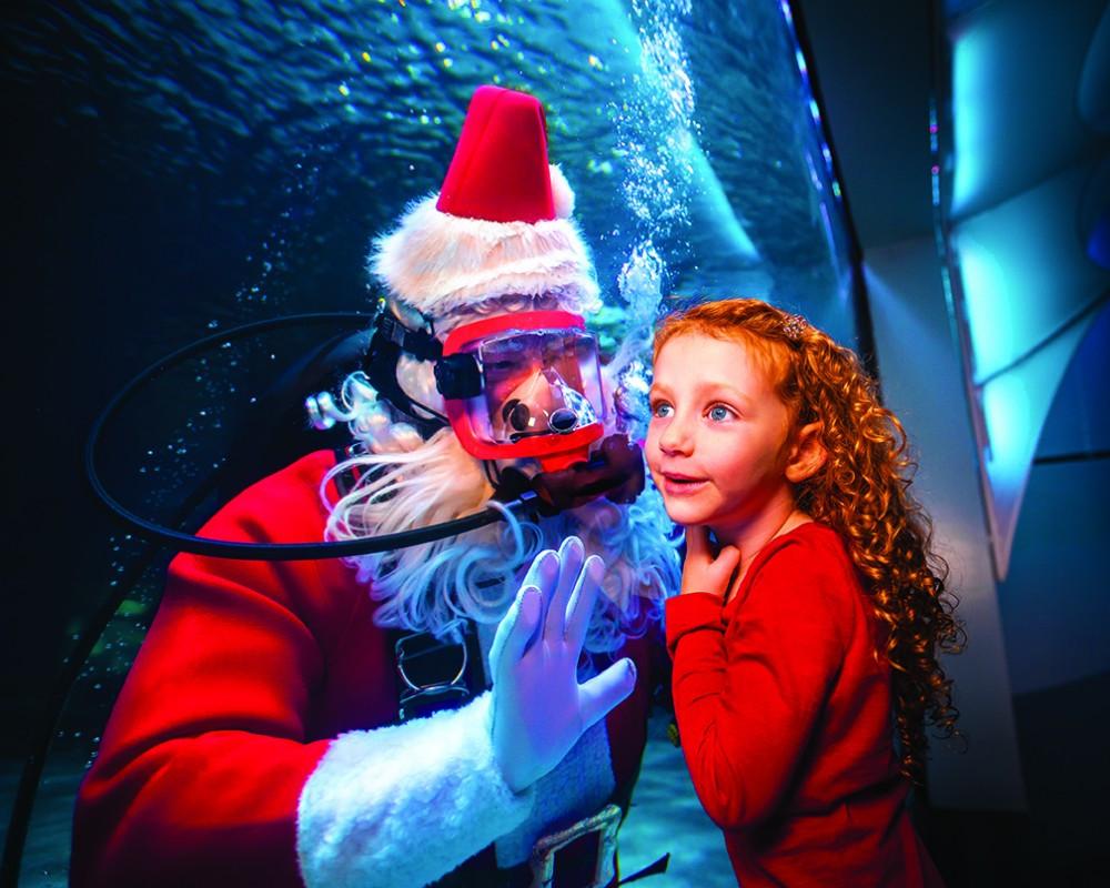 Newport Aquarium Christmas Lights  Top 5 Christmas Events for Thanksgiving Week Cincinnati