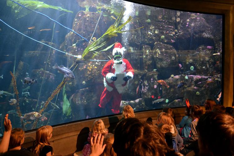 Newport Aquarium Christmas Lights  Oregon Coast Aquarium Sea of Lights Celebration Newport OR
