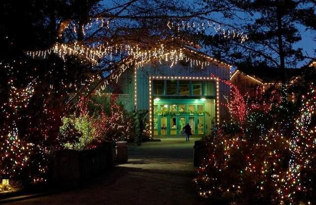 Newport Aquarium Christmas Lights  'Sea of Lights' to light up Oregon Coast Aquarium Oregon