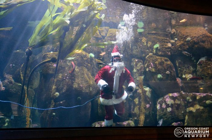 Newport Aquarium Christmas Lights  Take This Magical Christmas Lights Road Trip Through