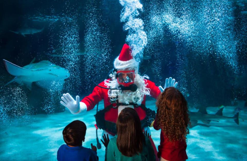 Newport Aquarium Christmas Lights  Santa Proves He Can Swim at the Newport Aquarium s Water