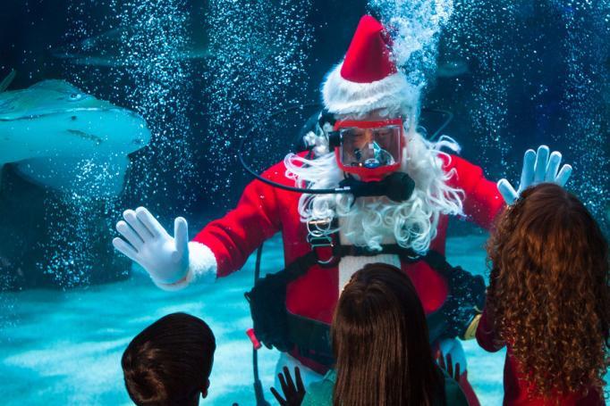 Newport Aquarium Christmas Lights  Must Do in Cincinnati