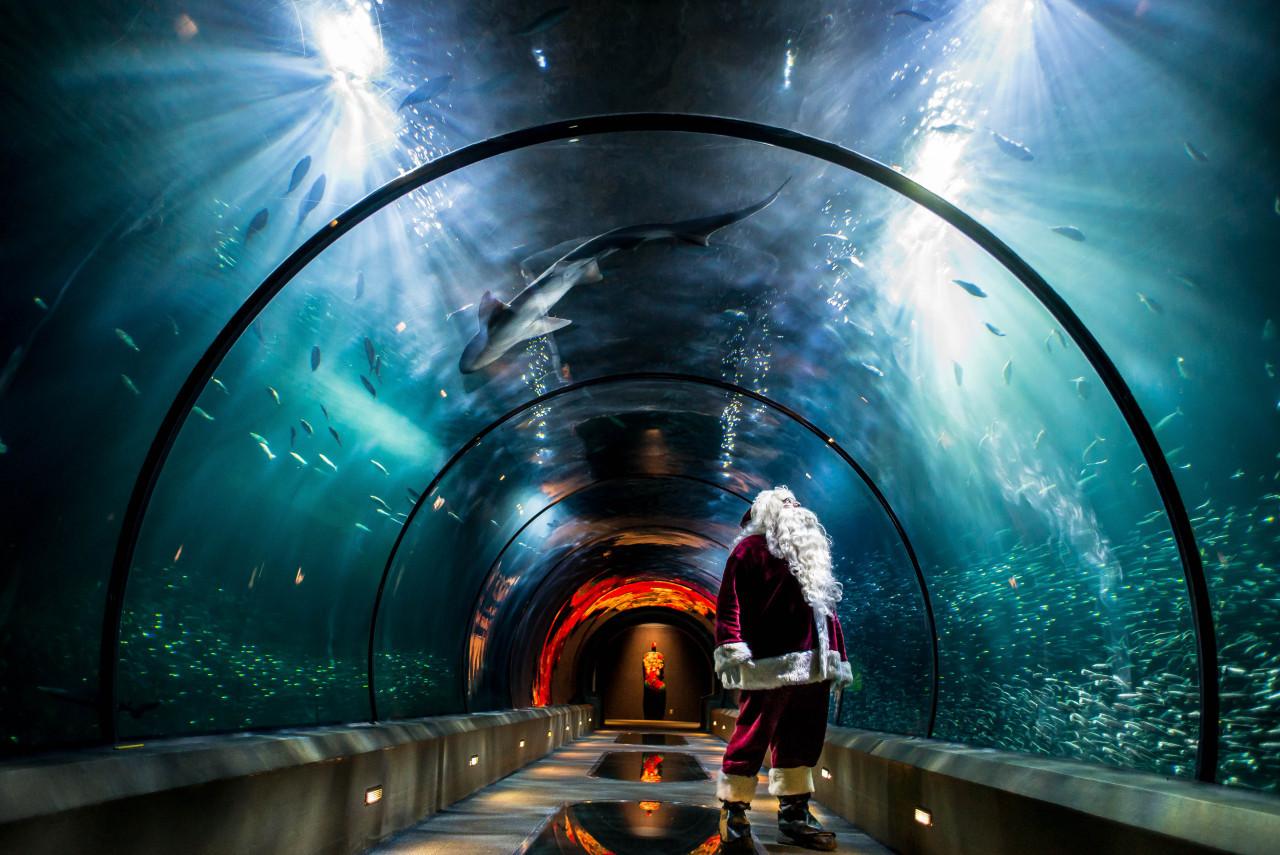 Newport Aquarium Christmas Lights  Discover Newport