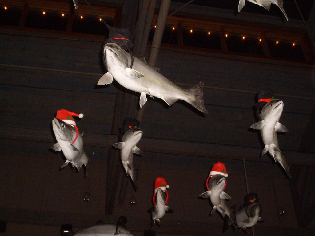 Newport Aquarium Christmas Lights  Casing Oregon Christmas at the Coast Newport s Sea of Lights
