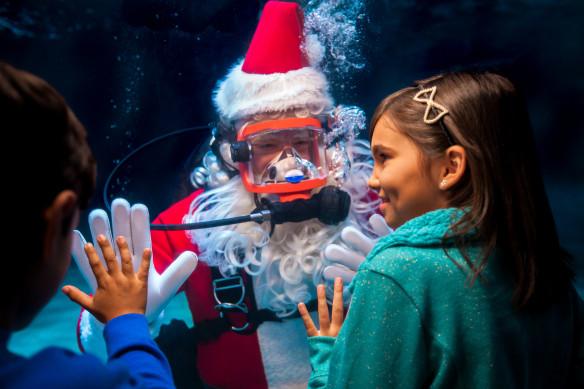 Newport Aquarium Christmas Lights  Scuba Santa is ing back Water Wonderland to celebrate