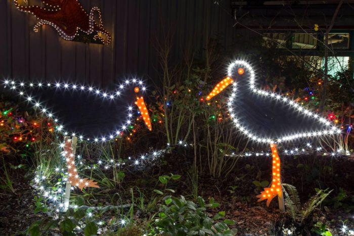 Newport Aquarium Christmas Lights  Sea of Lights The Oregon Aquarium Decorated With Over