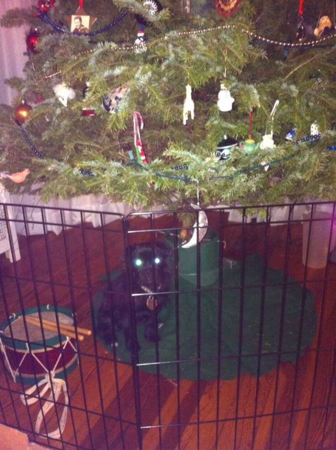 Pet Gate For Christmas Tree  In the eyes of the family pet Times Union