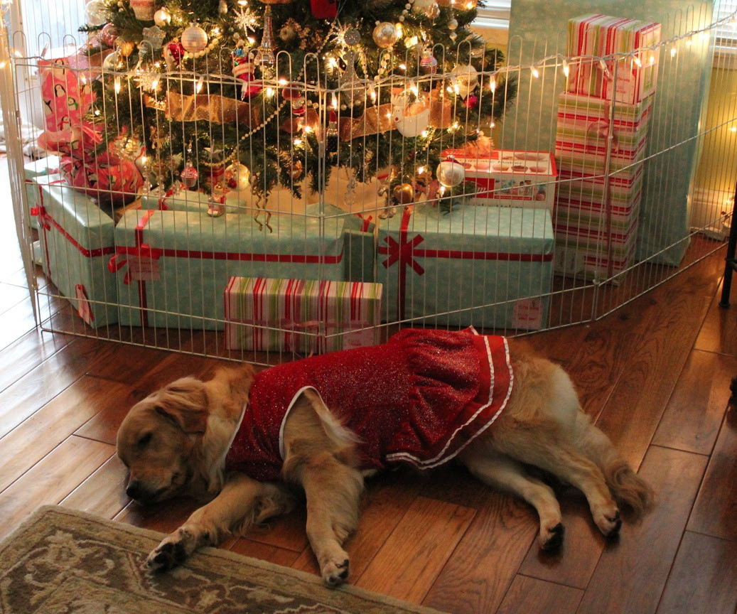 Pet Gate for Christmas Tree Beautiful Lexi the Golden Retriever Napping Under the Christmas Tree